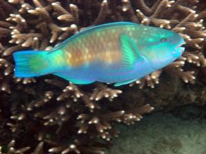 Sulu Sea Wildlife