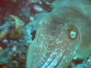 Sulu Sea Wildlife 2
